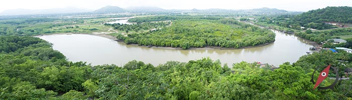 Mangrove Forest 2