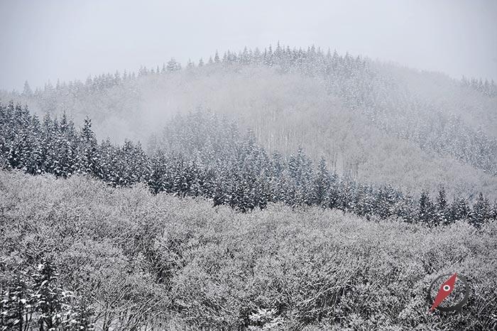 4 Akita Snow 4
