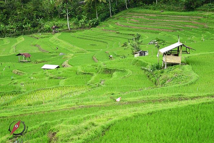 Tana Toraja 2