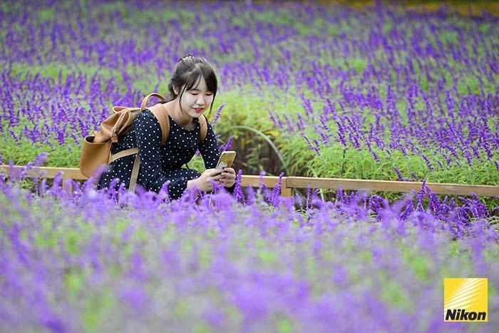 สวนดอกไม้ Ashikaga flower park 1