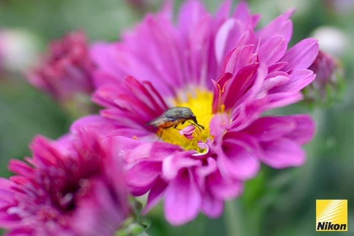 สวนดอกไม้ Ashikaga flower park 3