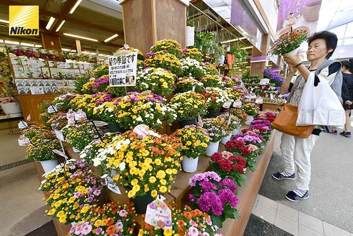 สวนดอกไม้ Ashikaga flower park 4