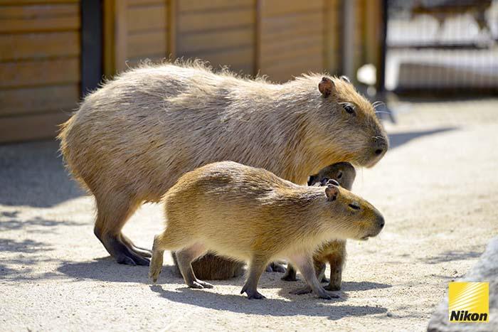 สวนสัตว์ nasu oukoku 1