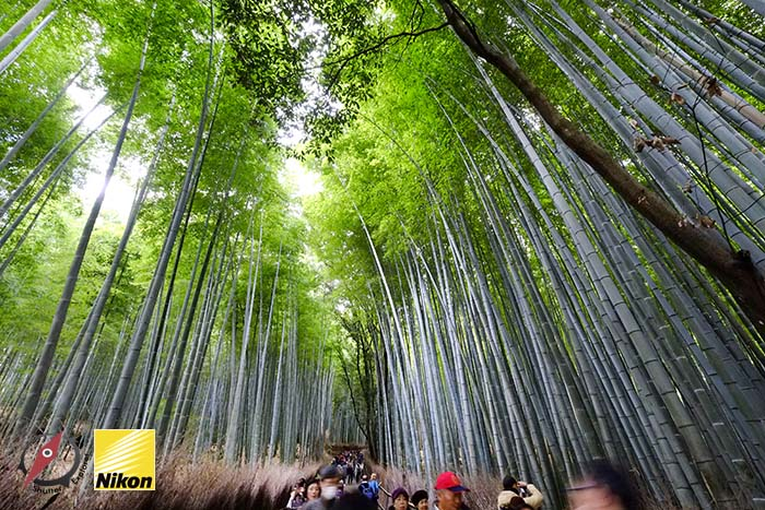 สวนไผ่ kyoto 3