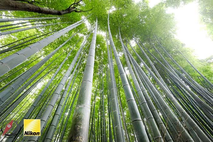 สวนไผ่ kyoto 4