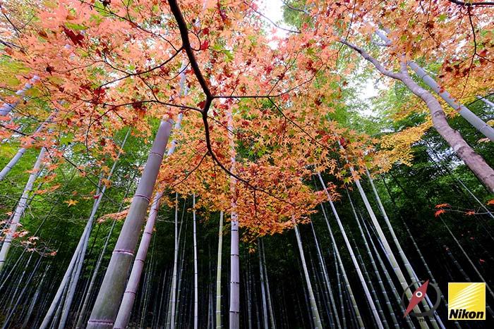 สวนไผ่ kyoto 6