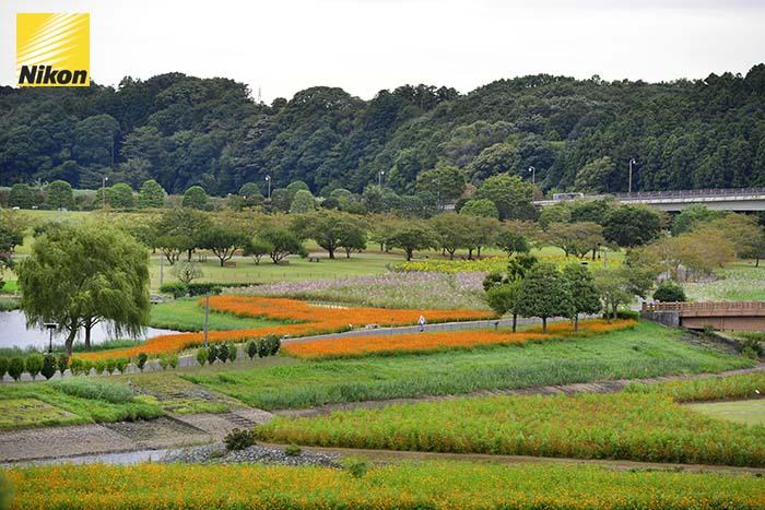 mito สวนไคราคุเอน