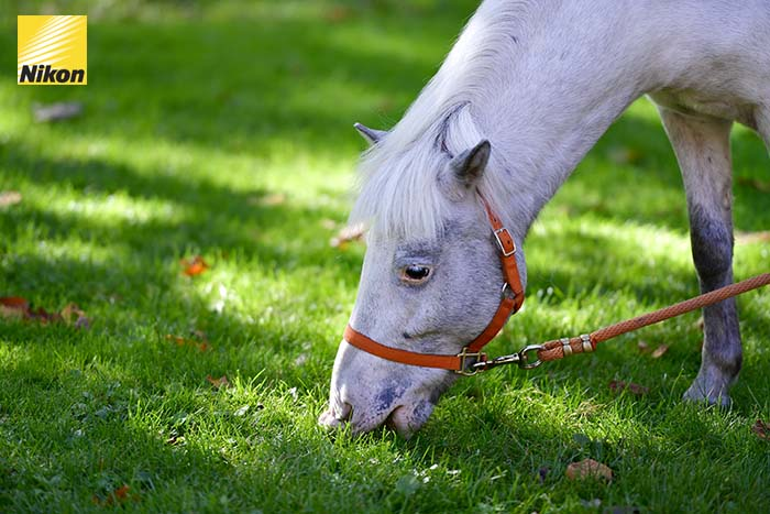 tomakomai northern horse park 4