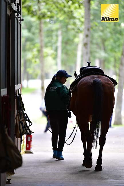 tomakomai northern horse park 5