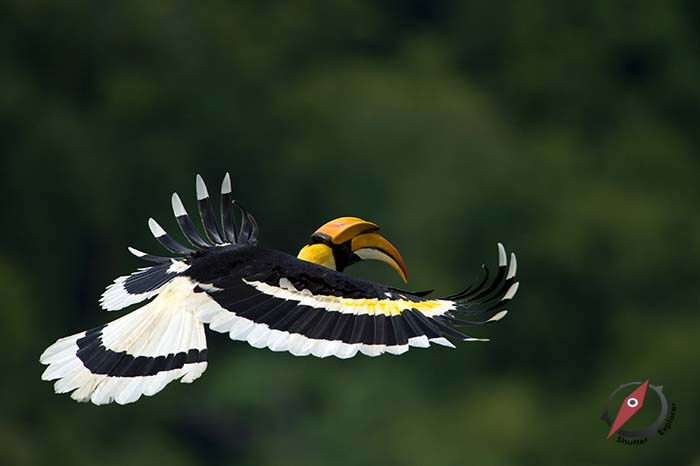 Bird นกกก นกกาฮัง นกเงือก 1