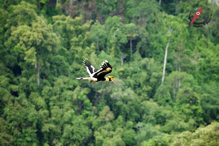 Bird นกกก นกกาฮัง นกเงือก 2